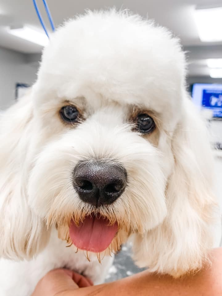 Laker Paws Dog Grooming Packages